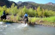 Two horses crossing Verde
