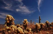 Teddy Bear Cholla, Saguaros, arizona desert jeep tours, Photography Workshop, so