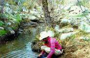 Prospector panning for gold