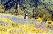 Prospector in flowers