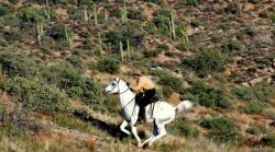 Man riding up a hill on a white horse, the horse is running/galloping.