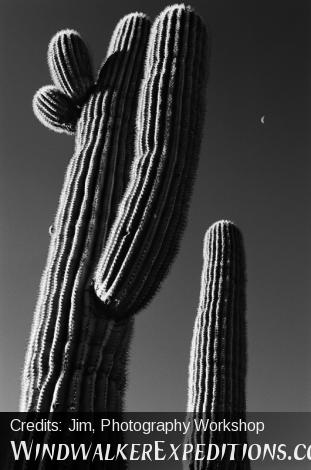 Black and White Photography, Saguaro and Half Moon, Sonoran Desert