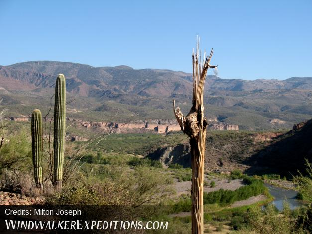 Saguaro Skeleton with a view