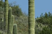 Crested Saguaro, Photography Workshop, Hiking Arizona, Sonoran Desert Tour