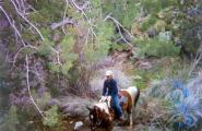 Seven Springs trail ride